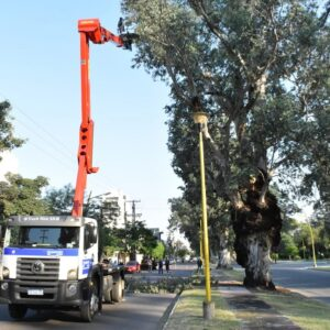 La Municipalidad comienza la poda programada por seguridad en el parque Aguirre